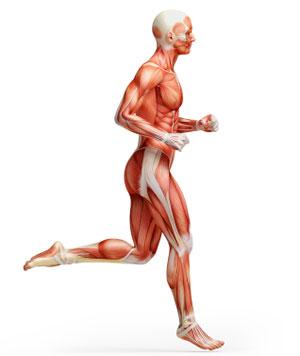 exercise science anatomy