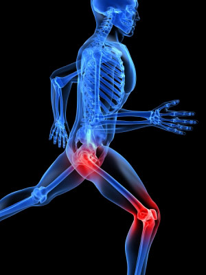 anatomy and kinesiology of the lower body webinar
