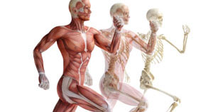 What do I really need to know from ACE's Essentials of Exercise Science for Fitness Professionals manual? | Bindi Delaney | Exam Preparation Blog | 6/19/2013