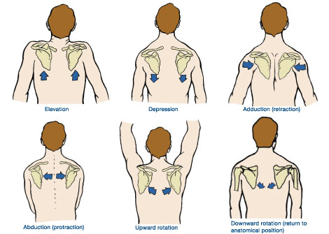 Correct Cues for Scapular Motion