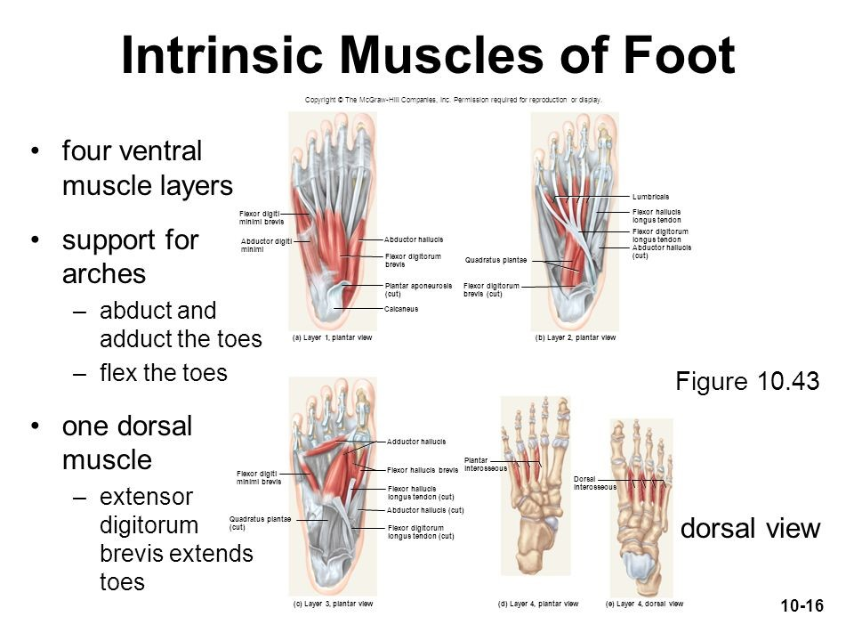 How Strong Is Your Foots Core