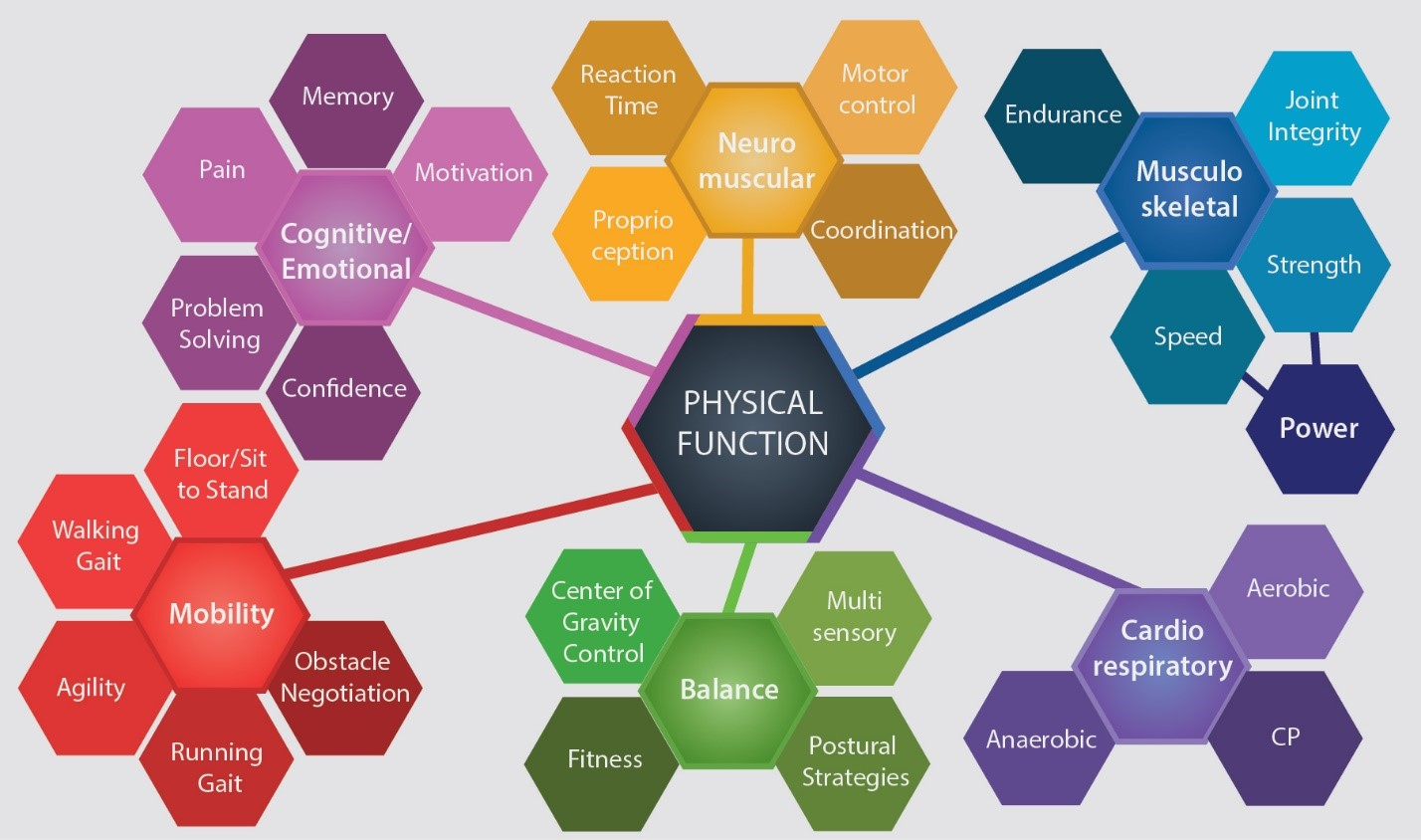 Functional Aging Training Model Copyright Functional Aging Institute 2018. Used with permission.  Note: CP = creatine phosphate system