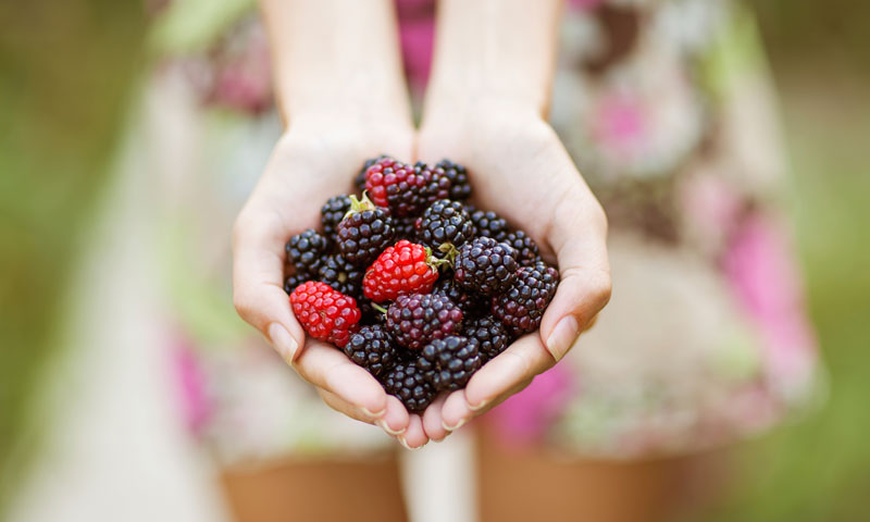 5 Fiber Foods You Can't Live Without